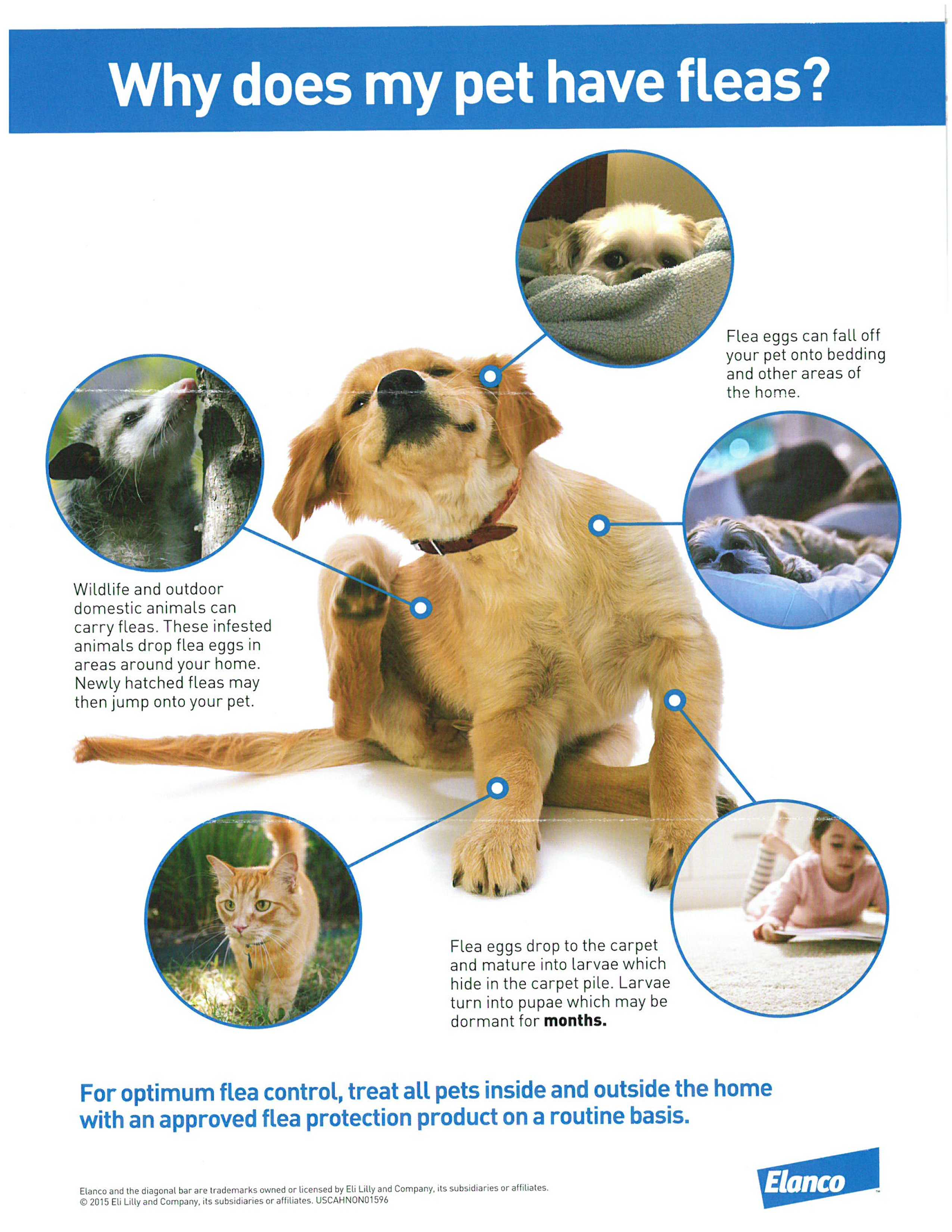 Does my pet have fleas - For optimum flea control, treat all pets inside and outside the home with an approved flea protection protection product on a routine basis.